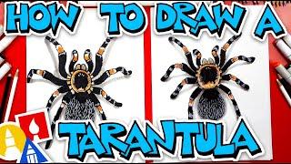 How To Draw A Tarantula Red Knee