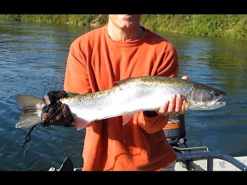 Salmon and steelhead fishing Manistee river