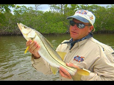 Addictive Fishing: Chokoloskee Linesiders - SNOOK in the everglades