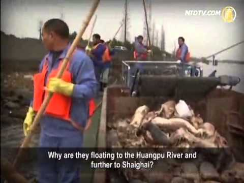 Stories of Shanghai, Huangpu River and Jiaxing City
