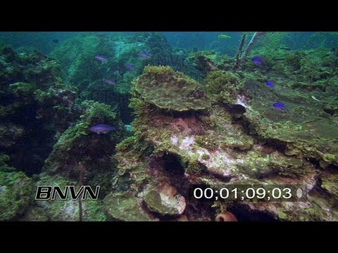 7/21/2007 Sherwood Forest, Dry Tortugas TER Stock Footage