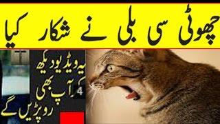 Choti Si Cat Na ShikAr Kia  Children Ya Video Na Dakha (2016)