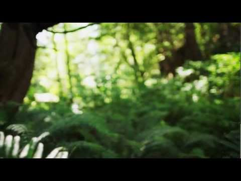 "Emancipator ""Minor Cause"" Official Music Video"