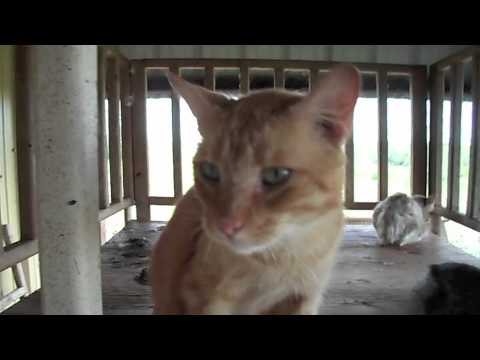 A video taken by an anonymous Uvalde Animal Shelter employee shows ...