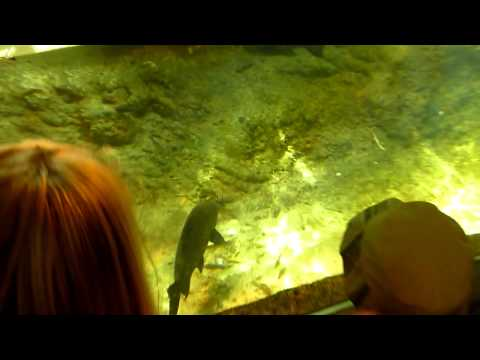 Video Panasonic Fz38- Zoo video