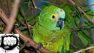 Top 10 Most Beautiful Birds of Amazon Rainforest