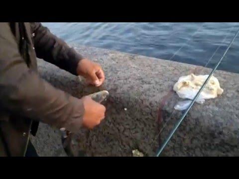 как ловить рыбу на реке неве