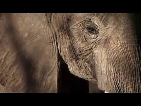 96 Elephants: The Life and Death of Elephants