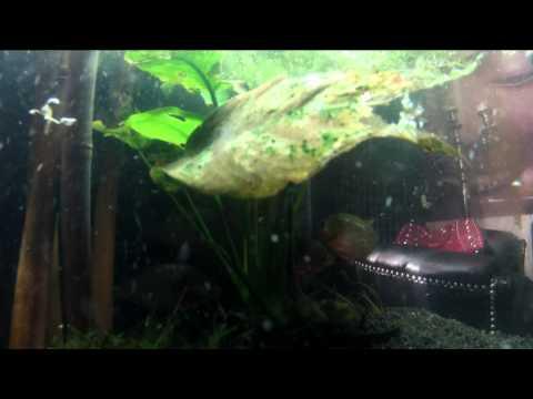 Gopro hd hero 2 flat lens housing test piranha s ed skillz