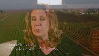 E & J Gallo Winery, el encanto de un buen vino