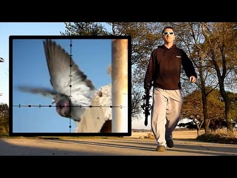 Air Rifle Pigeon Hunting Slow-Motion (Nov 4. 2010)