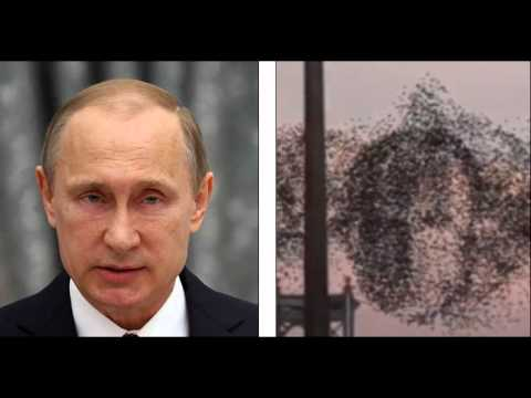 Crazy! Flock of Birds Take the Shape of Human Face In New York, Or CGI?