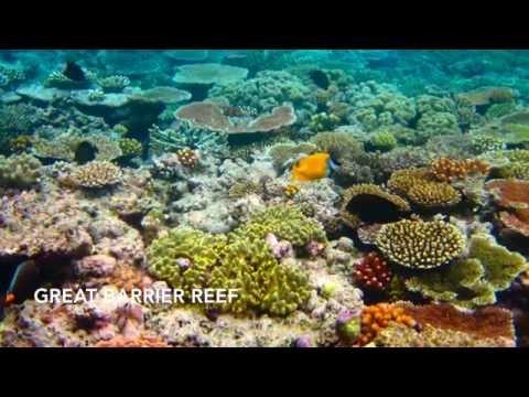 Globe Trotter- Australia in-flight video
