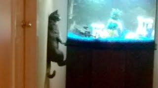 CAT COMPILATION that DESERVES AN OSCAR! - You will LAUGH YOUR BUTT OFF
