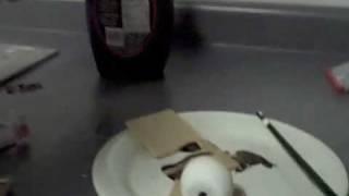 Ghetto Smore making (The Collegiate Roast)