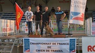 2015 - Championnat de France Ring à Domérat Goliah du Banc des Hermelles - Jean-Claude Rouillard