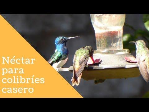 Néctar casero para colibríes o picaflores