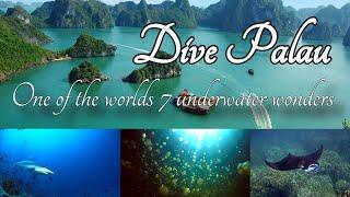 Dive Palau, movie trailer