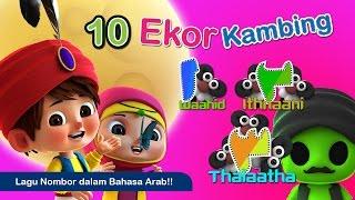 Download Arabic Numbers Song | Kira Jumlah Kambing | Iman & Sara 3Gp Mp4