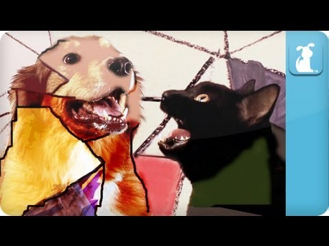 Gotye Dog Parody - Somebody That I Used To Know video