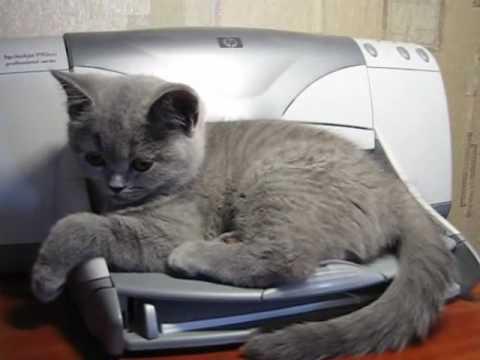 見事な落ちっぷり!プリンタにビビる猫
