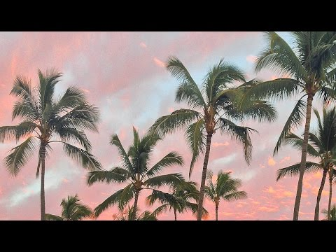 Magical adventures in Kauai and the Island of Hawaii! Swimming with dolphins, helicopter flight, parasailing and lots more. �(Edit from future me: I had not started eating vegan yet in this...