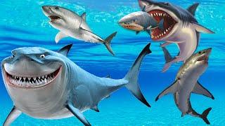 Shark Finger Family Song Nursery Rhymes Lyrics Daddy Finger