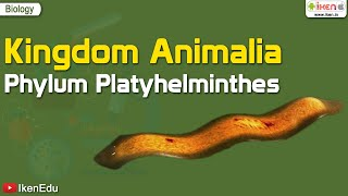 Kingdom Animalia: Phylum Platyhelminthes