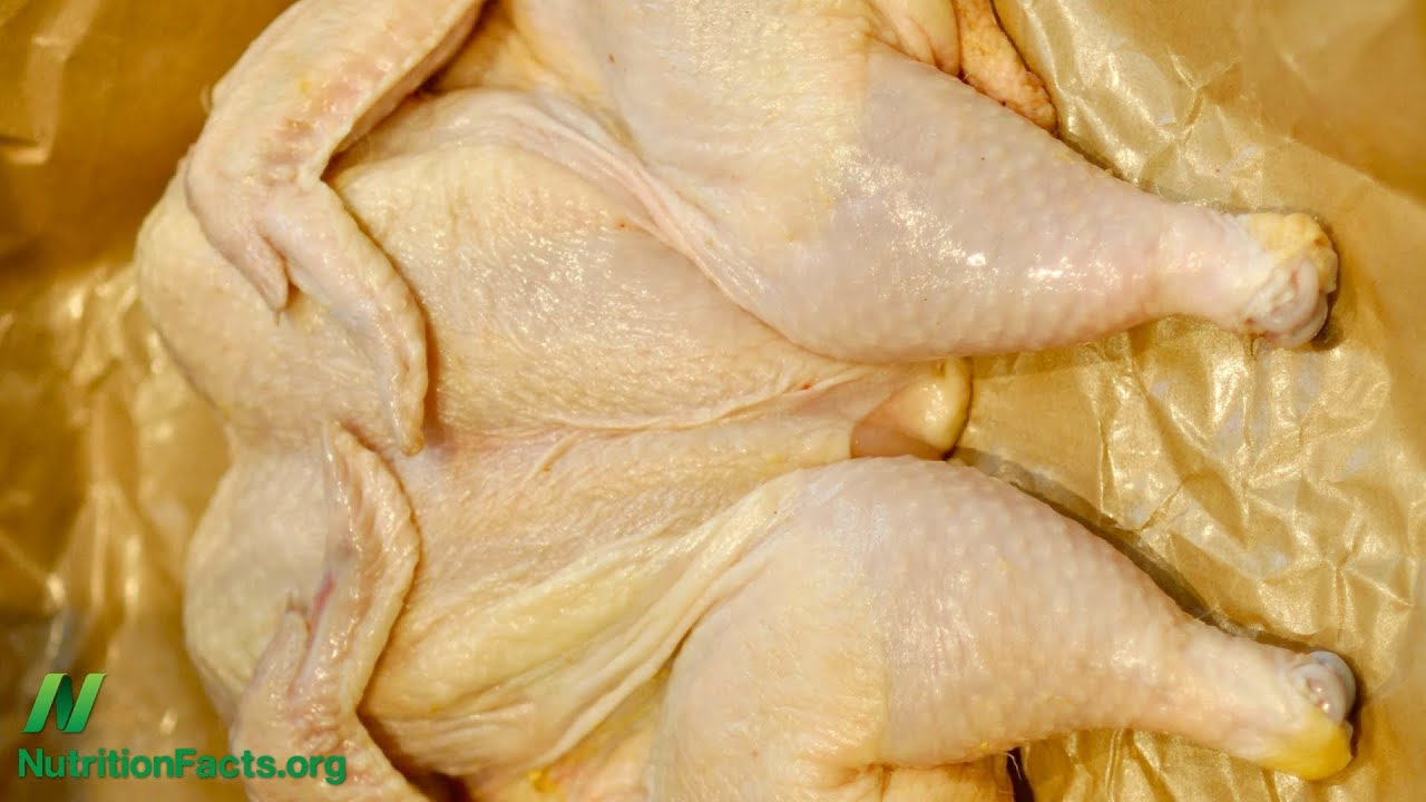 Chicken Out of UTIs