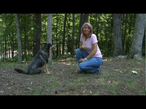 heather tesch the weather channel fleas in your home heather tesch