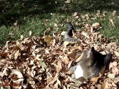 Happy Cats - Autumn Leaves