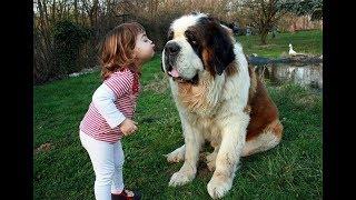 Những chú chó dễ thương bảo vệ em bé - Những chú chó và em bé chơi cùng nhau