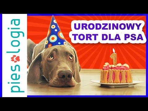 Przepis Na Tort Urodzinowy Dla Psa