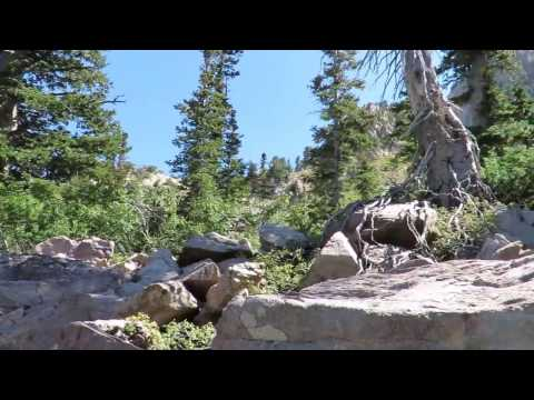 12 people observe Bigfoot for combined 14 minutes Uinta Mountains
