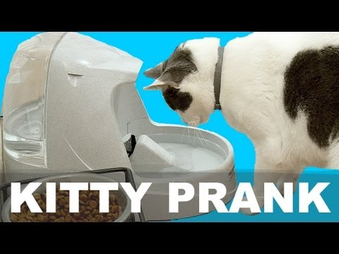 KITTY WATER - PRANK