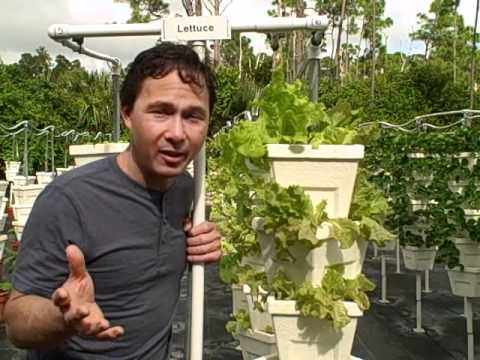 Teaching Kids Vertical Hydroponic Growing & Raised Bed Gardening at Pine Jog School in South Florida