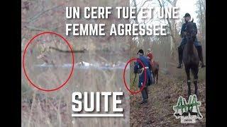Un cerf tué et une femme agressée à Compiègne, SUITE !