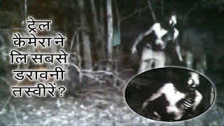 Unexplained images caught by trail camera?