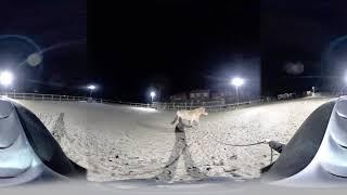 Circleing JJ fjord horse 360 video on Huawei EnVizion 360 camera