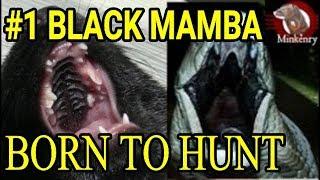 Episode 1- The Journey Begins   Black Mamba: Born to Hunt
