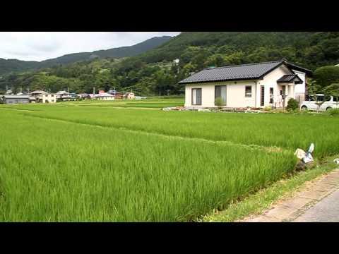ชาวนาวันหยุด แกล้งข้าว@Japan-2