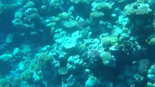 Beautiful corals and colourful fish (Red Sea)