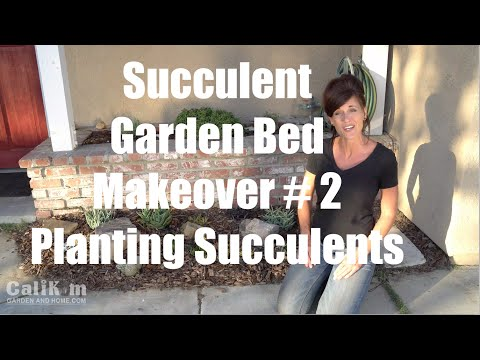 Succulent Garden Bed Makeover #2 - Planting Succulents in the Front Yard