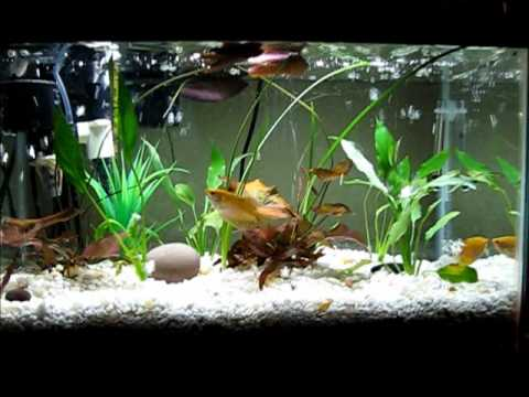 Diy My Aquarium With Filtration Under Gravel For Crystal