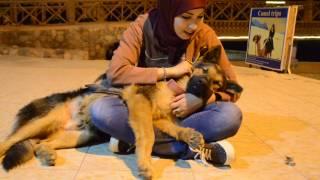 Download بتناديني تاني ليه انا وصديقتي والكلب المعجزة تقديم بطريقتي Mohamed #stars 3Gp Mp4