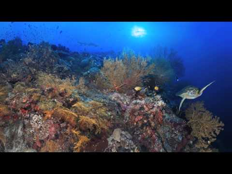 Portrait of a Coral Reef: Sulu Sea