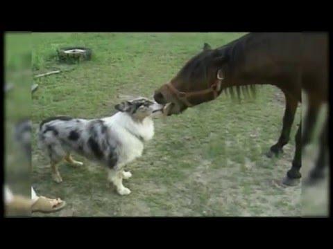 動物達の恋人同士のようなシーンが仲良しそう♪