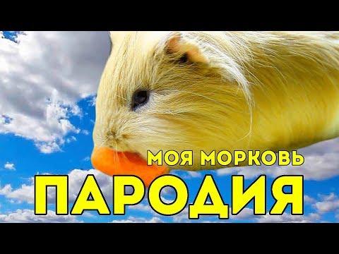 ПАРОДИЯ: Макс Барских — Моя любовь (Моя морковь) / SvinkiShow