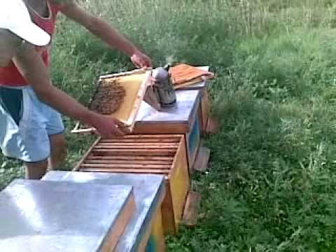 stuparitul apicultura