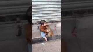 Monkey love kids